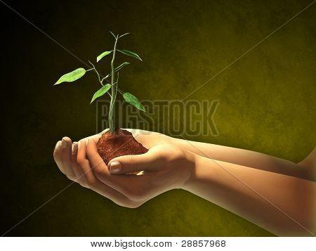 Mujeres manos sosteniendo algunos suelos y una planta de semillero. Ilustración digital. Clipping path incluido a separ