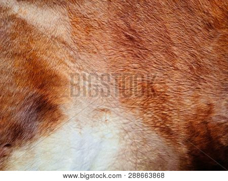 Beige Textured Background, Well Visible Texture, Cowhide, Skin With A Pattern In White Beige Tones