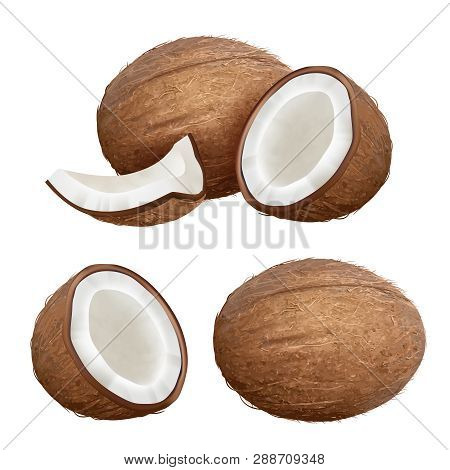 Coconut Realistic. Tropical Closeup Nature Fruit From Fresh Palm Vector Coconut Milk Pictures. Palm