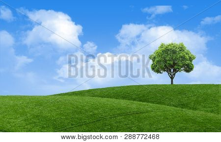 Green Summer Landscape Scenic View Wallpaper. Beautiful Wallpaper. Solitary Tree On Grassy Hill And