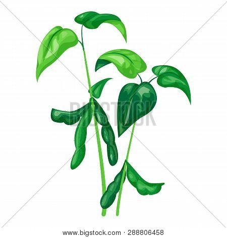 Soya Plant Icon. Cartoon Of Soya Plant Vector Icon For Web Design Isolated On White Background