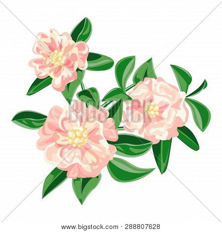 Garden Pink Camellia Icon. Cartoon Of Garden Pink Camellia Vector Icon For Web Design Isolated On Wh