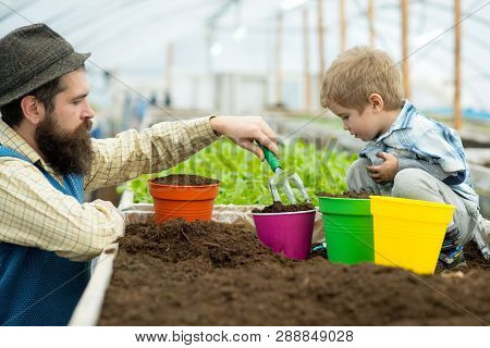 Planting Together. Father And Son Planting Together In Greenhouse. Happy Family Planting Together. P