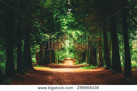 Walkway Lane Path With Green Trees In Forest. Beautiful Alley In Park. Pathway Way Through Dark Fore