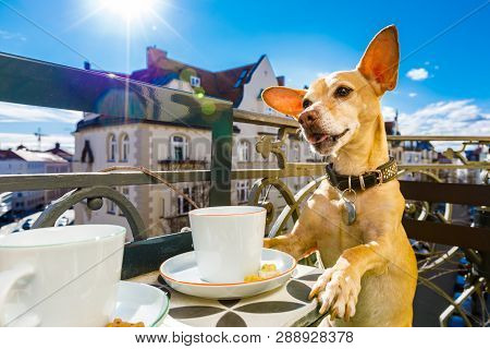 Chihuahua Dog Having A Coffee Or Tea Break On Balkony With Cup And Spoon On Table , Enjoying The Nic