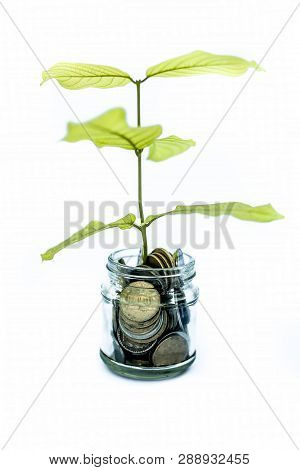 A glass jar full of coins and plant growing through it. Concept of savings, interest, fixed deposits, pension, social security cheque, Isolated on white. poster