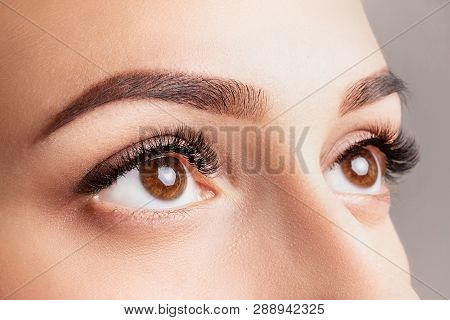 Eyelash Extensions, Lamination, Waving, Coloring. Long False Eyelashes. Fresh Looking Eye. Brown Eye