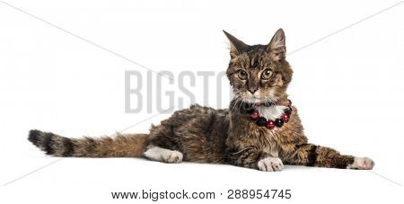 Domestic cat, 16 years old, lying in front of white background