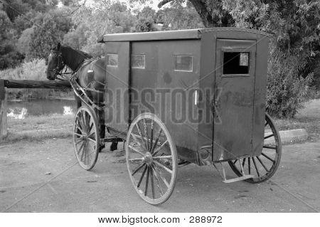 B&w Mennonite Horse And Buggie