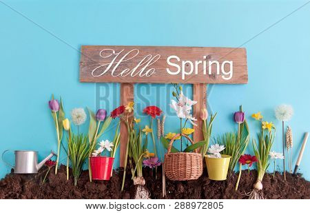 Spring Flowers Planted In Earth On A Blue Paper Background With Hello Spring Sign Post