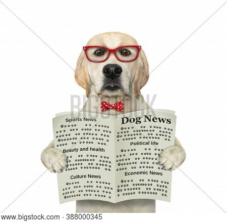 A Dog In A Red Bow Tie And Glasses Is Holding An Open Newspaper And Reading It. White Background. Is