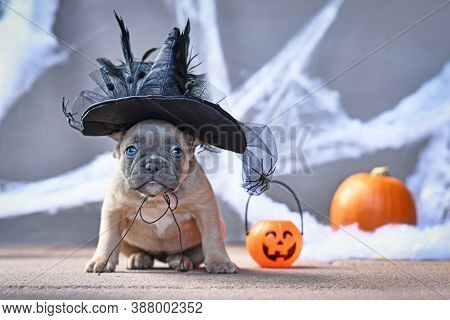 Cute French Bulldog Dog Puppy Dressed Up With Large Halloween Witch Hat In Front Of Seasonal Backgro