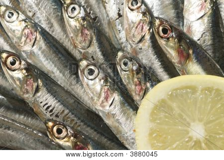 a crowded herd of sardines ready to cook poster