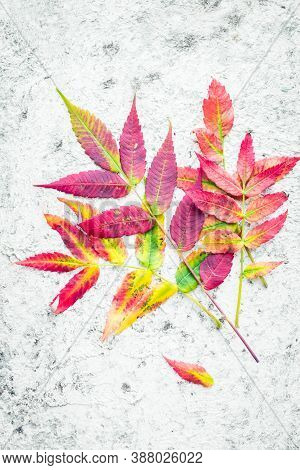 Bright Colorful Autumn Leaves On Grey Background With Copy Space For Text. Beautiful Autumn Colors.