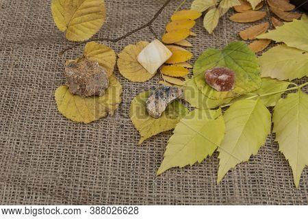 Yellow Semi-precious Natural Stones - Hemimorphite, Cerussite, Halite, Modern Pearl - Lie On Yellow