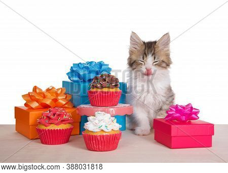 Norwegian Forrest Cat Kitten Sitting On A Light Wood Floor Next To A Small Pedestal Table With A Cho