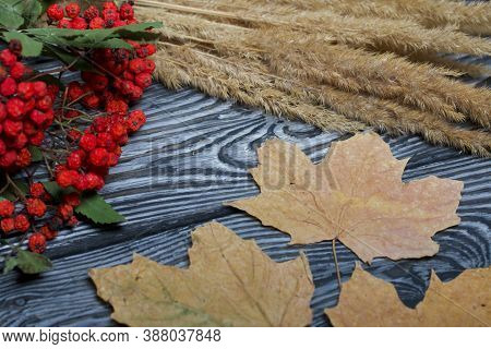 A Bouquet Of Dried Grass And Rowan Branches. Nearby Are Dried Maple Leaves. They Lie On Black Pine B