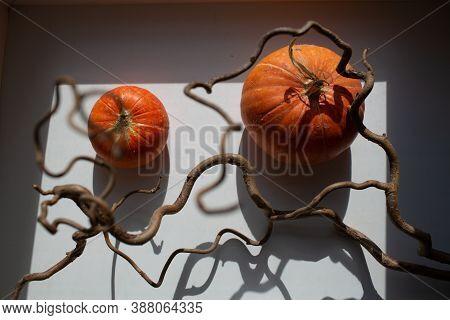 Autumn Orange Pumpkins Overhead View With Shadows