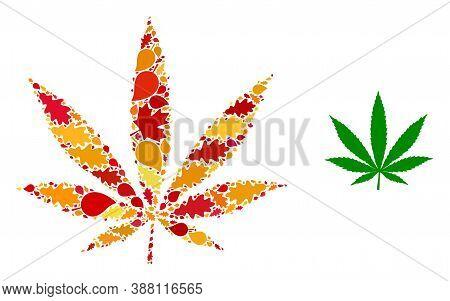 Cannabis Mosaic Icon Designed For Fall Season. Vector Cannabis Mosaic Is Organized From Randomized A