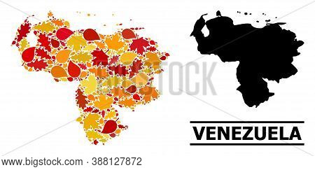 Mosaic Autumn Leaves And Solid Map Of Venezuela. Vector Map Of Venezuela Is Organized From Randomize