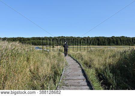 Bird Watcher Walking On A Footbridge In A Marshland On The Island Oland In Sweden