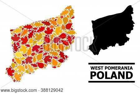 Mosaic Autumn Leaves And Usual Map Of West Pomerania Province. Vector Map Of West Pomerania Province