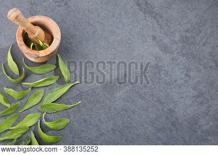 Fresh And Green Stevia Leaves - Stevia Rebaudiana. Mortar