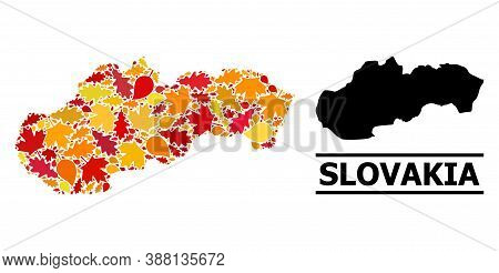 Mosaic Autumn Leaves And Usual Map Of Slovakia. Vector Map Of Slovakia Is Organized With Scattered A