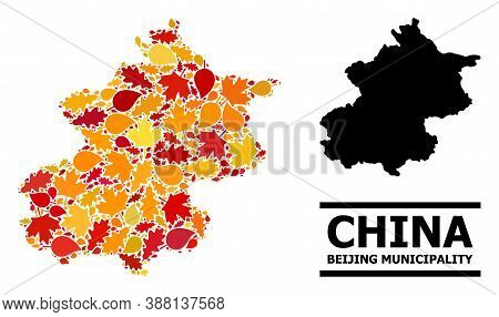 Mosaic Autumn Leaves And Solid Map Of Beijing Municipality. Vector Map Of Beijing Municipality Is Or