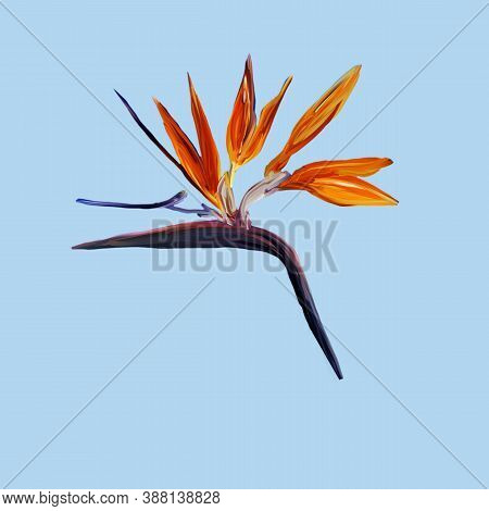 Gouache Painted Bird Of Paradise. Watercolor Illustration With Realistic Branch Of Strelitzia On Blu