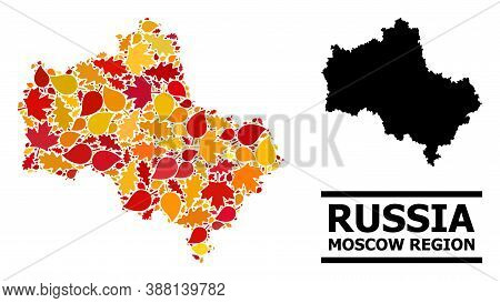 Mosaic Autumn Leaves And Usual Map Of Moscow Region. Vector Map Of Moscow Region Is Shaped From Rand