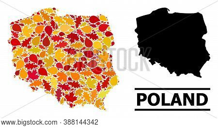 Mosaic Autumn Leaves And Solid Map Of Poland. Vector Map Of Poland Is Composed Of Scattered Autumn M