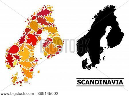 Mosaic Autumn Leaves And Solid Map Of Scandinavia. Vector Map Of Scandinavia Is Shaped From Scattere