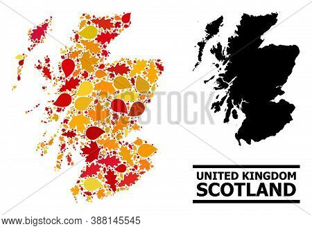 Mosaic Autumn Leaves And Usual Map Of Scotland. Vector Map Of Scotland Is Done With Randomized Autum