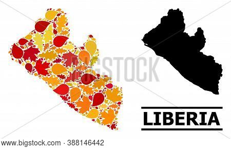 Mosaic Autumn Leaves And Solid Map Of Liberia. Vector Map Of Liberia Is Organized Of Random Autumn M
