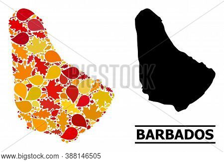 Mosaic Autumn Leaves And Usual Map Of Barbados. Vector Map Of Barbados Is Created Of Random Autumn M