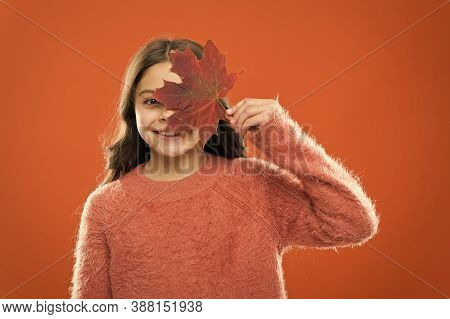 Ingredient In Baking And Sweetener. Maple Syrup. Little Child Hold Maple Leaf. Small Girl Smiling Wi
