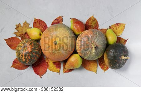 Autumn Harvest: Pumpkins, Pears And Multicolored Leaves On Gray. Centerpieces Thanksgiving Day. View