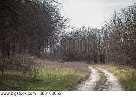 Hiking Sandy Dirt Path In The Suboticka Pescara, Near The Serbia City Of Subotica, In Vojvodina. The