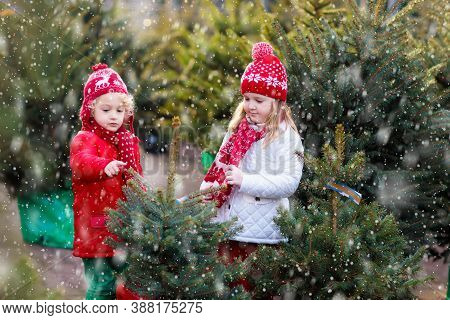 Family Selecting Christmas Tree. Kids Choosing Freshly Cut Norway Xmas Tree At Outdoor Lot. Children