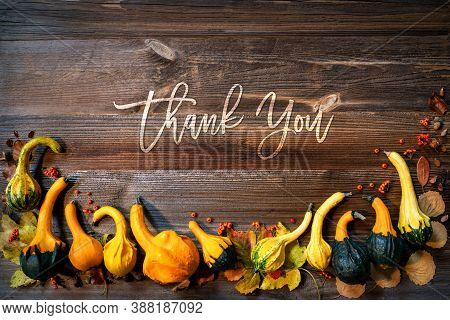Colorful Pumpkins As Autumn Season Decoration, Text Thank You