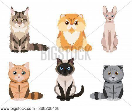 Set Of Different Cat Breeds: Main Coon, Persian, Siamese, British Cat, Scottish Fold, Sphynx. Cute I