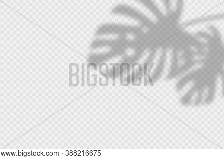 Shadow Overlay Of Monstara Leaves. Transparent Overlay Shadow Effect From Palm Leaf. Realistic Soft