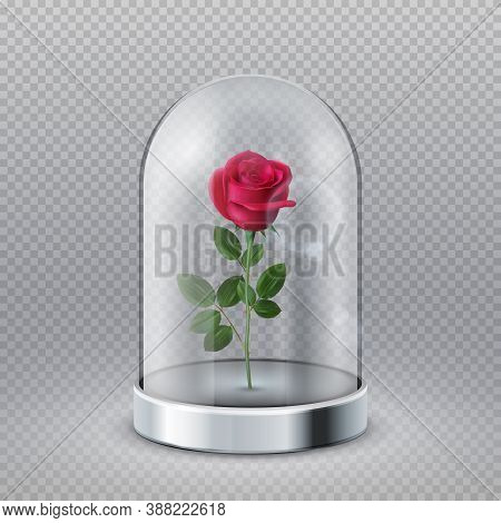 Rose In Glass Dome. Isolated Beautiful Red Flower Under Transparent Flask. Fairy Tale Symbol, Beauty