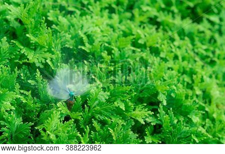 Automatic Lawn Sprinkler Watering Green Plant. Sprinkler With Automatic System. Garden Irrigation Sy