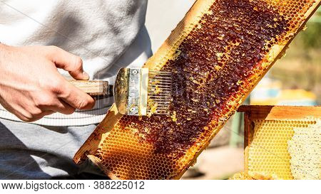 Beekeeping Concept, Beekeeping Tools. Frame With Bees Wax Structure Full Of Fresh Bee Honey, Beekeep
