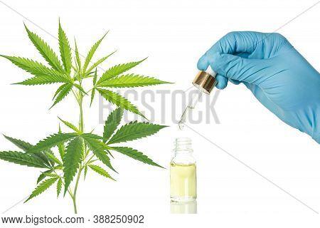 Cbd Hemp Oil, The Researchers With Blue Gloves Drop Hemp Oil In A Glass Tube Against Marijuana Plant