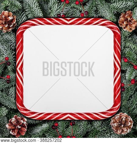 Christmas design copmosition of candy cane striped border frame noble fir tree branch and red holly berries pine cones isolated on white background with copy space for text