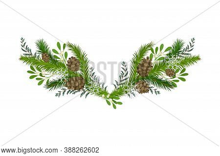 Evergreen Fir Tree Branches And Mistletoe Berry Twigs Semicircular Vector Composition