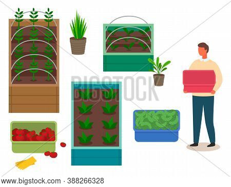 Grower Man Holding Empty Plastic Box, Fresh Tomatoes And Cucumbers In Boxes, Agricultural Occupation